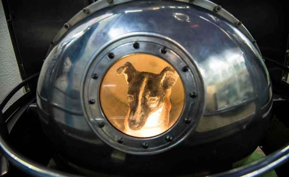 Hace 60 años la perrita Laika viajó al espacio y ya no regresó