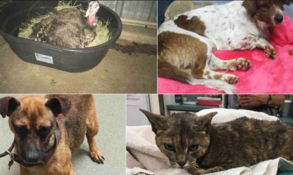 Buscan a dueños de mascotas rescatadas durante el incendio en San Diego