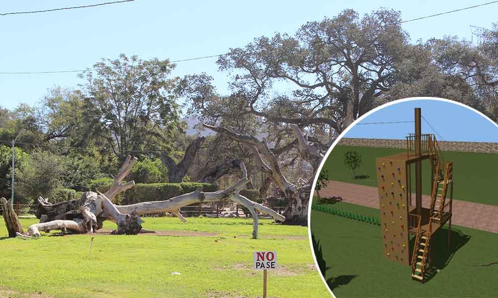 Construirán tirolesas que recorrerán el parque Los Encinos en Tecate