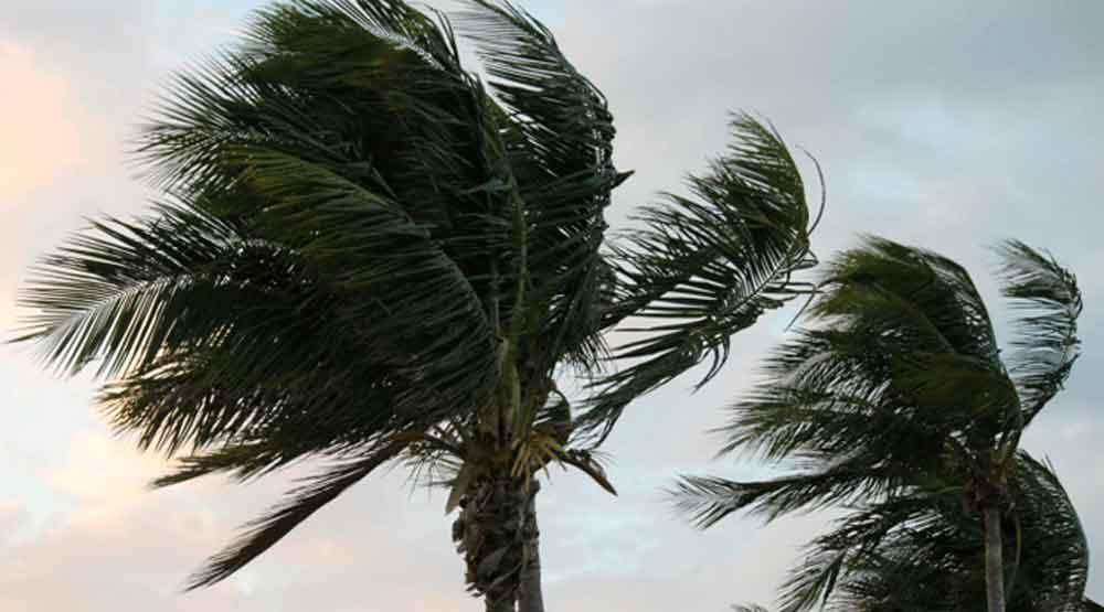 Regresan fuertes vientos a San Diego