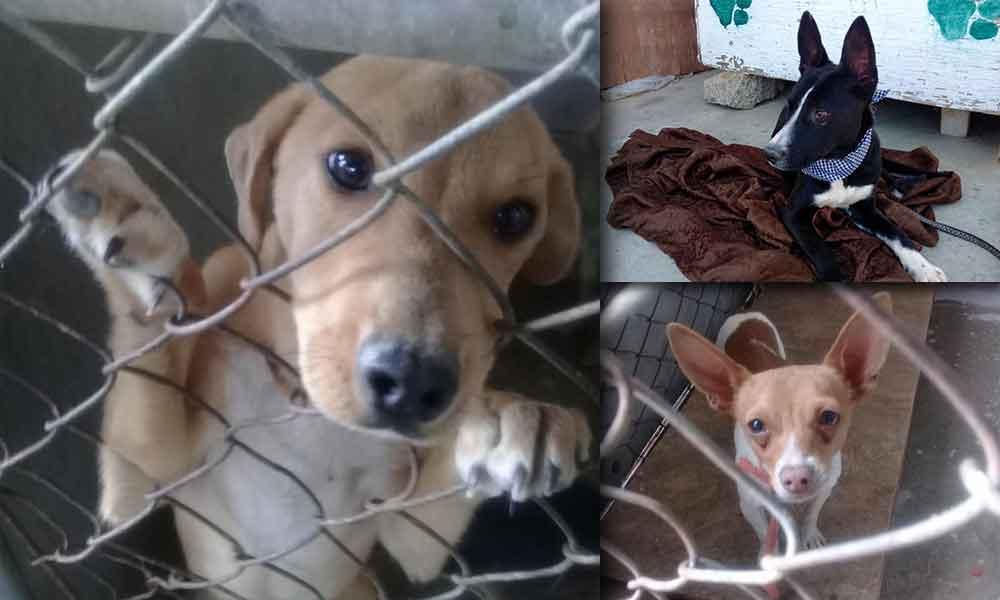 Adopta un amigo de cuatro patas en el antirrábico de Tecate; Salva una vida