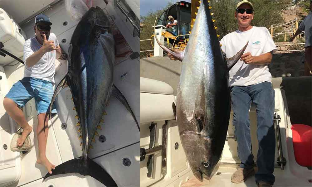 Pescadores sorprendidos: capturan atunes gigantes en Loreto