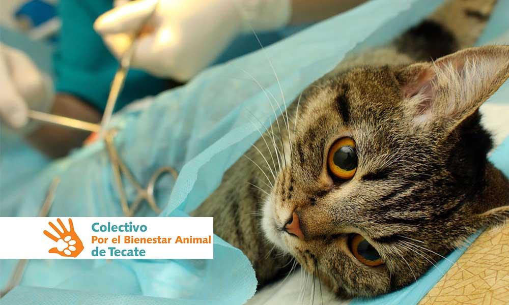 Campaña de esterilización para perros y gatos este 3 de febrero en Tecate