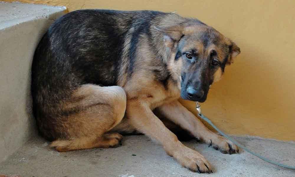 Alertan en redes sobre hombre que dispara a mascotas en Tecate