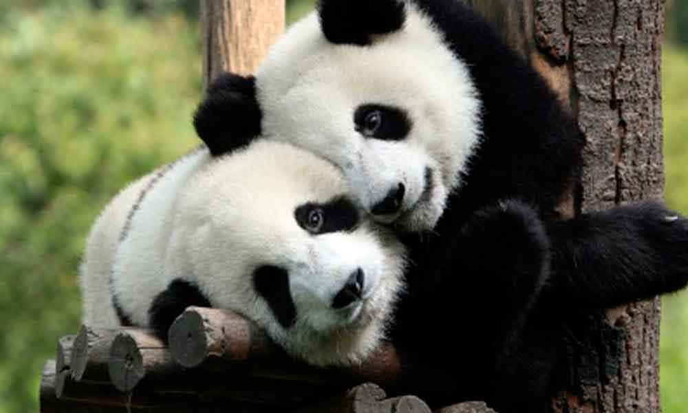 Zoológico para niños abrirá en San Diego