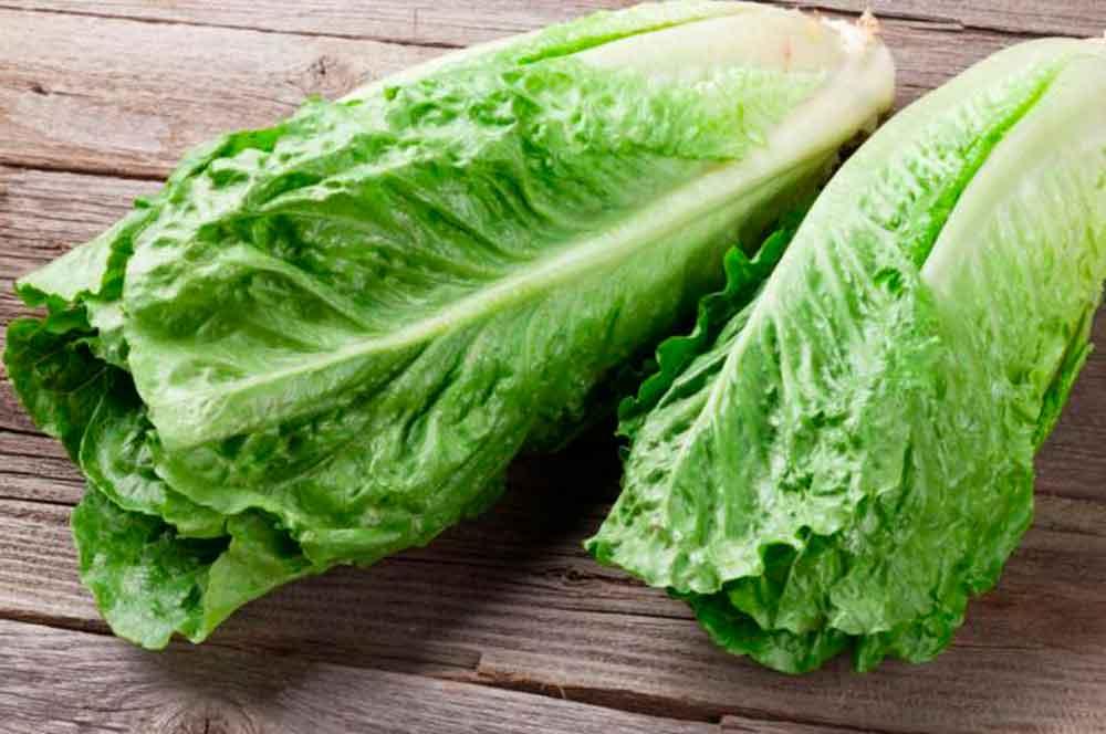 ¡No coma lechuga romana! Alerta EU por posible bacteria E. coli