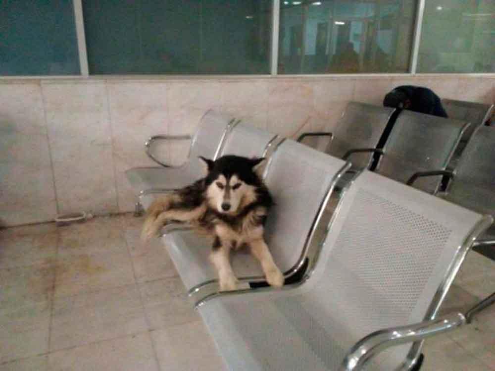 Como 'Hachiko', este perro espera a su dueño en un hospital de Monterrey