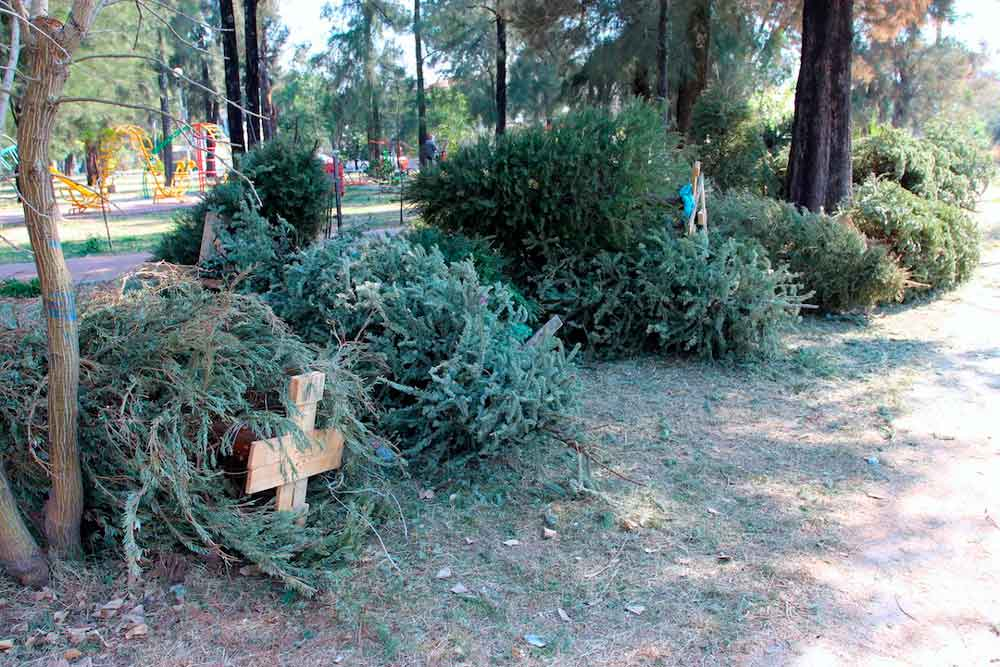 Invitan a reciclar árboles navideños