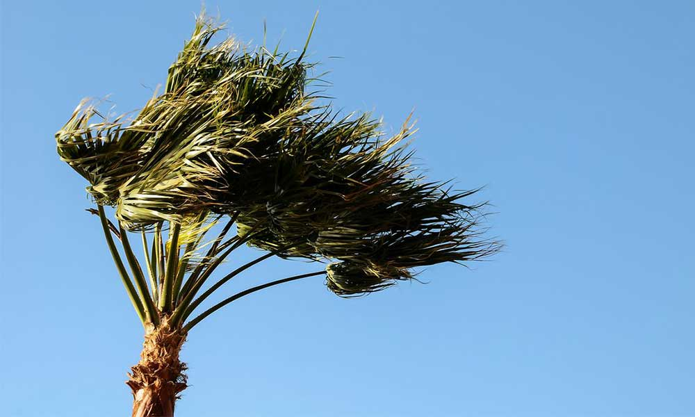 Hoy vientos Santa Ana para Baja California, hasta 45 kilómetros por hora