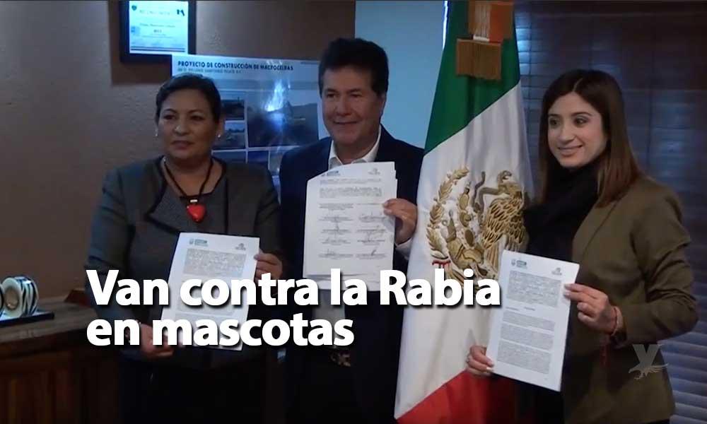 Signa Gobierno del Estado convenio con el Ayuntamiento de Tecate para la prevención y control de la Rabia