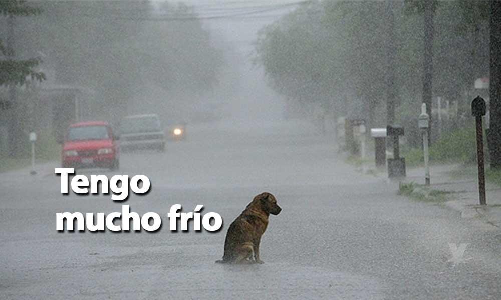 Ante las bajas temperaturas en Baja California cuida tu mascota