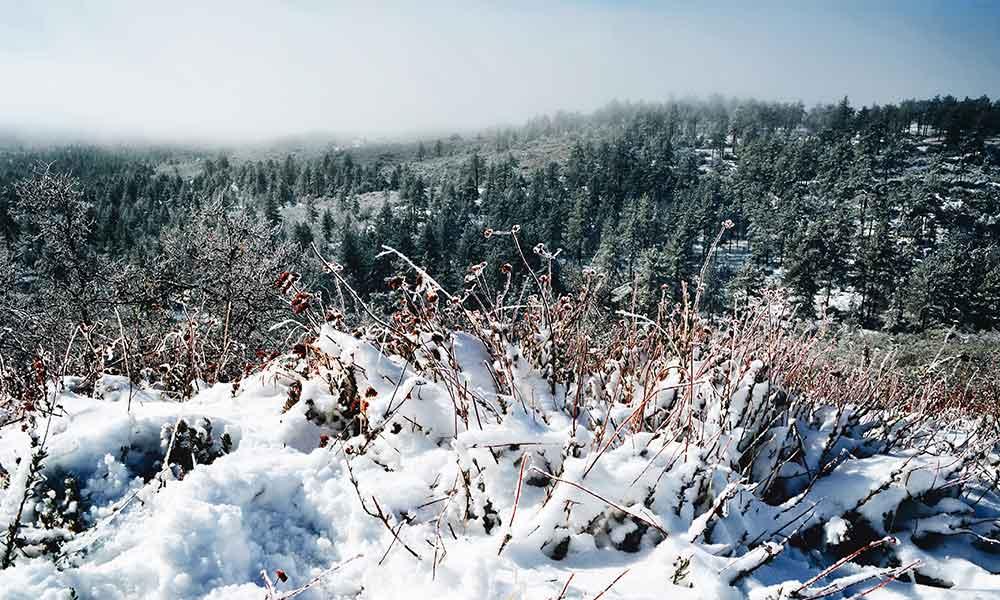 Se esperan fuertes nevadas en las montañas del Condado de San Diego, entre 6 y 12 pulgadas