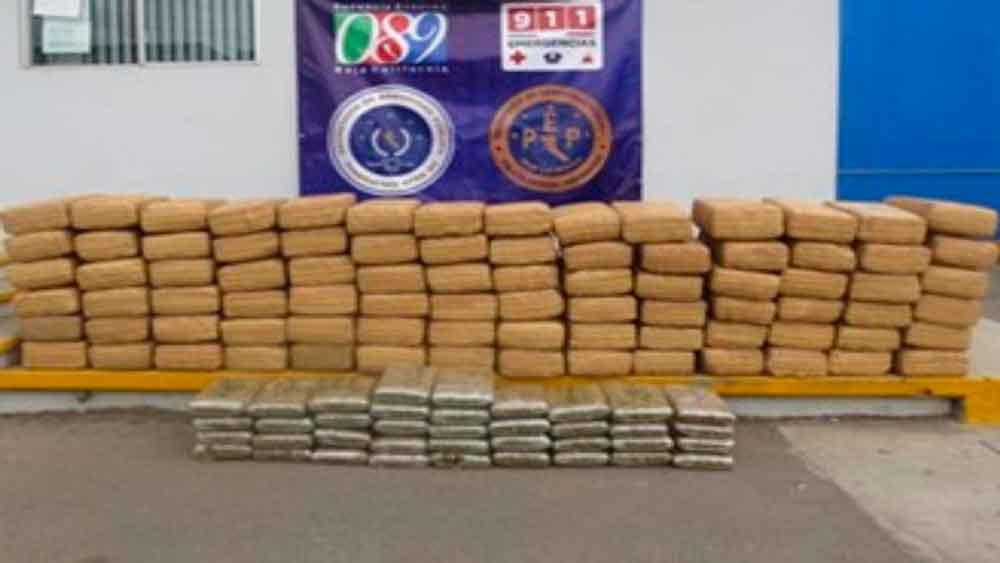Decomisan en Ensenada más de 500 kilos de marihuana