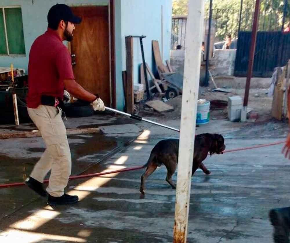Muere mujer atacada por su perro pitbull en Tijuana