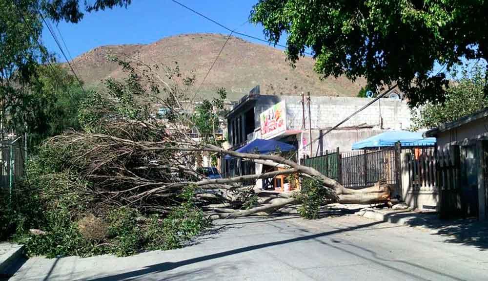 Reportan daños tras fuertes vientos en Baja California; ráfagas continuarán durante el día