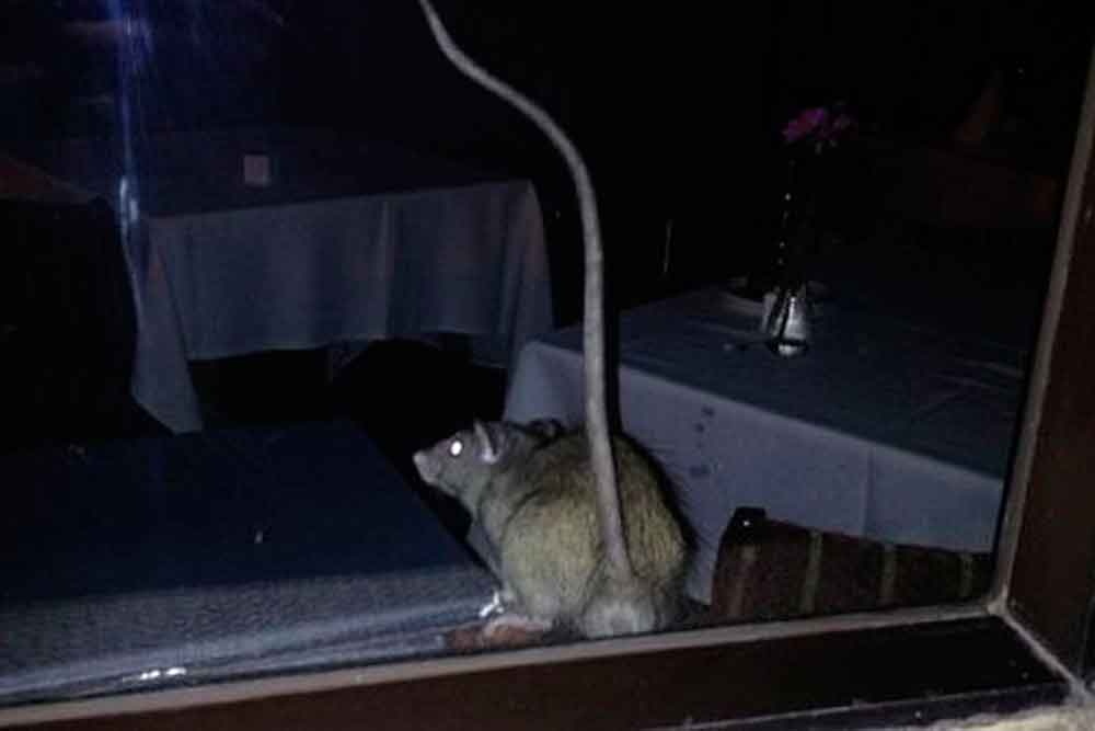 Cierran 10 restaurantes en California tras encontrar cucarachas y ratones en sus cocinas
