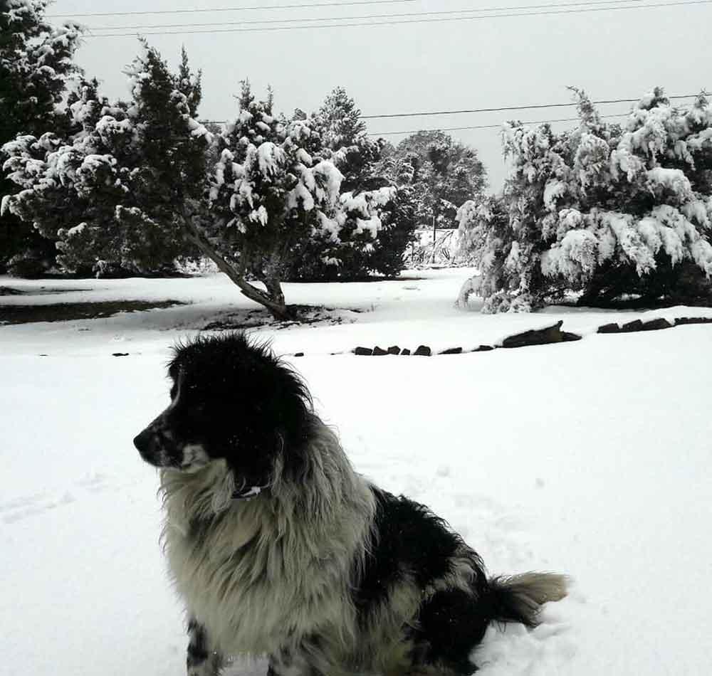 """Localizan a """"Cóndor"""", perrito extraviado tras la nevada"""