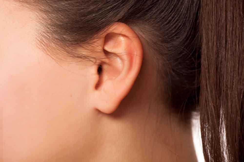 Científica mexicana diseña técnica para producir orejas