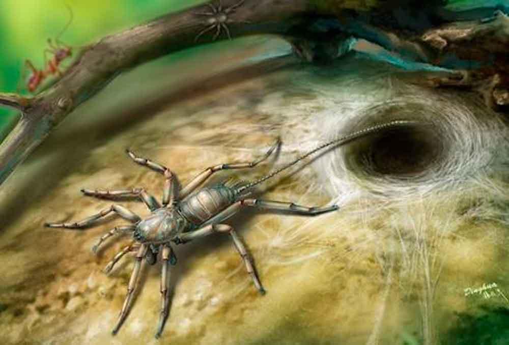 Hallan insecto prehistórico mitad araña, mitad escorpión