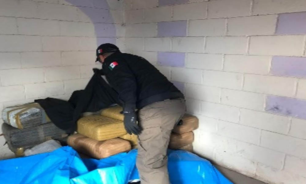 Aseguran en cateo más de 200 kilos de marihuana en Mexicali