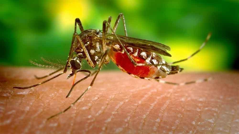 Confirman 10 casos de Zika en Baja California