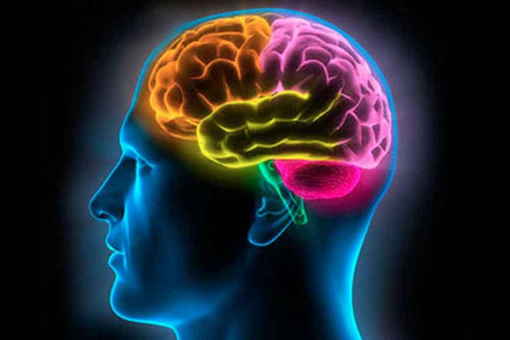 ¿Es posible tener un cerebro joven toda la vida?