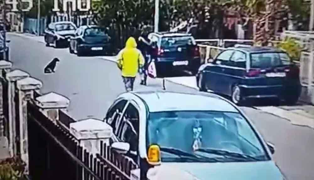 Impresionante momento en el que un perro salva a mujer de ser asaltada