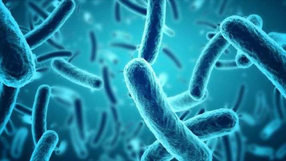 Alertan por la Enfermedad X, una plaga misteriosa que puede exterminar a la Humanidad