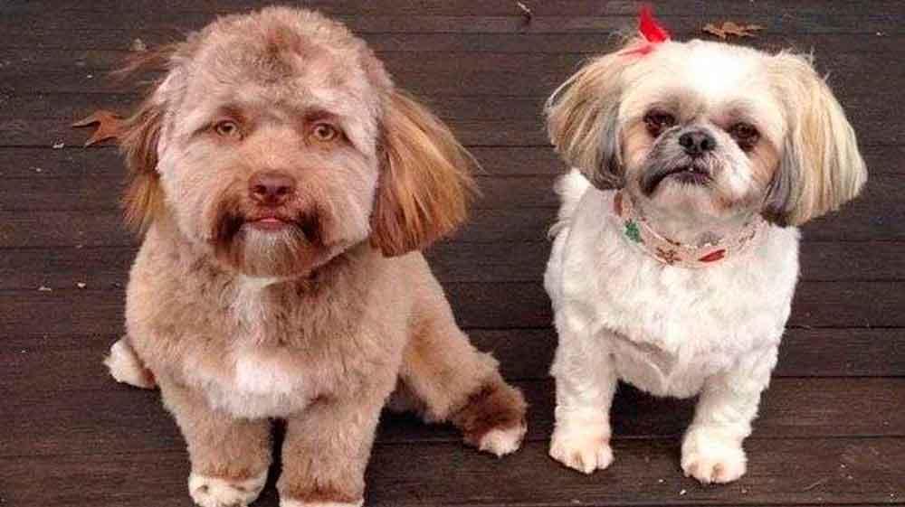 Perro con cara de humano causa furor en la Red