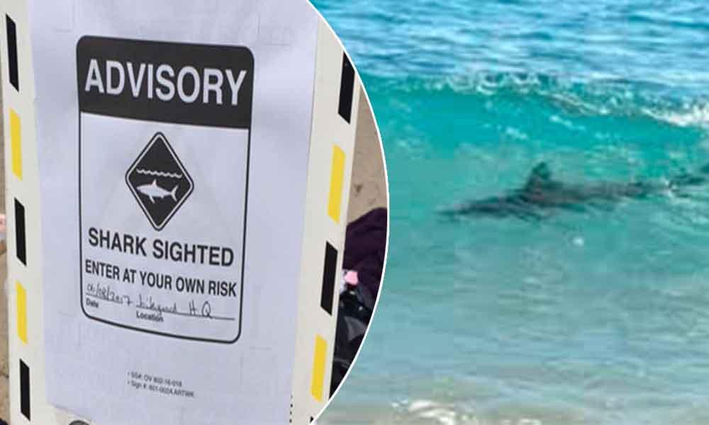 Cierran playa en San Diego tras avistamiento de tiburón
