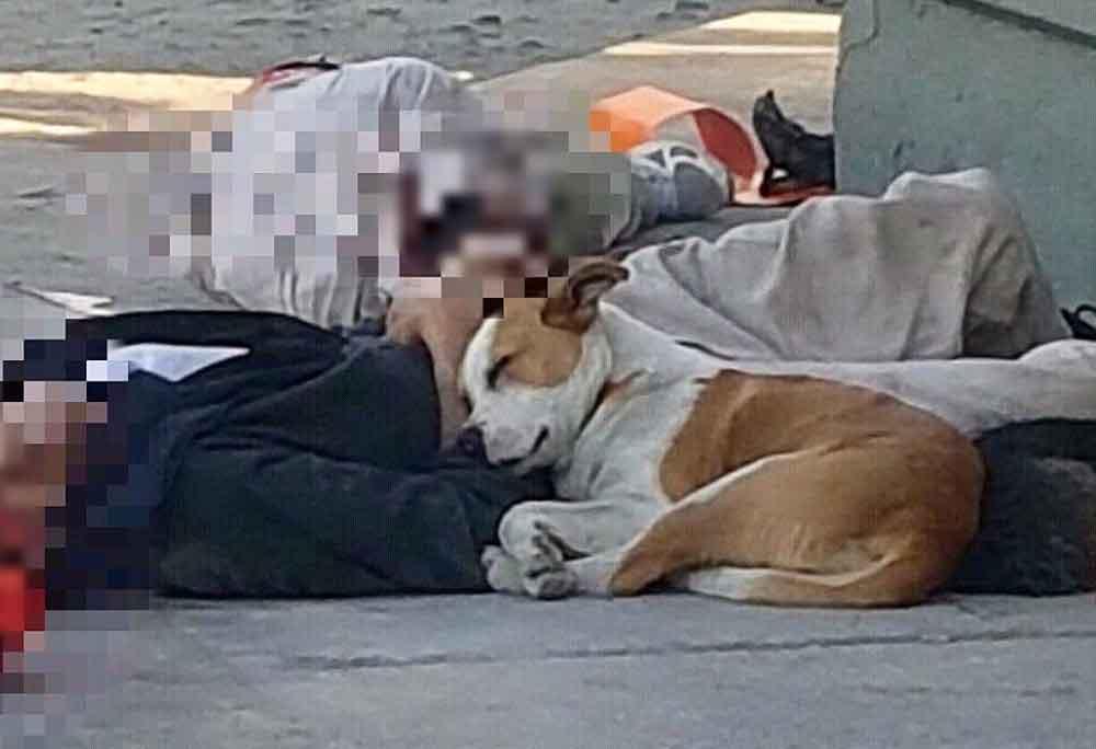 Perro se niega a abandonar a dueño asesinado en Tijuana