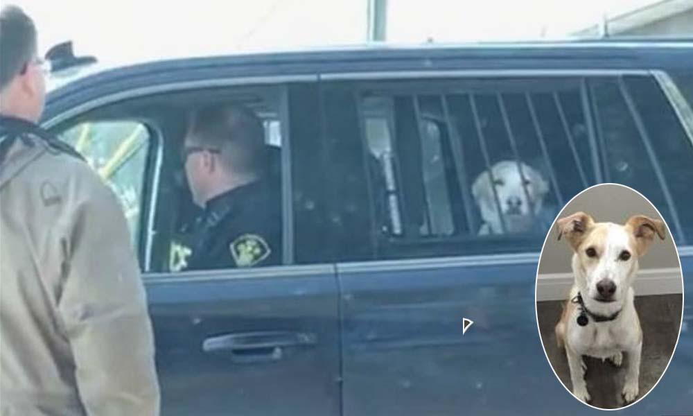 Arrresto de perro en Canadá se vuelve viral