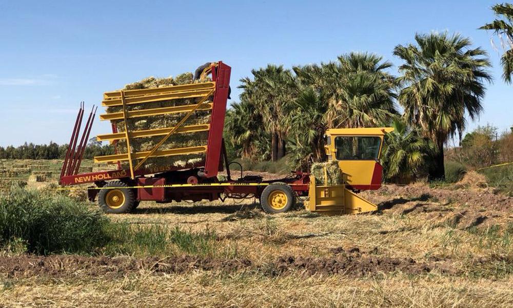 Muere trabajador realizando labores del campo en San Luis Río Colorado