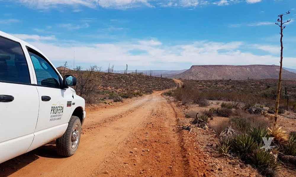Refuerza PROFEPA acciones de vigilancia para la protección del borrego cimarrón y su hábitat, en Baja California