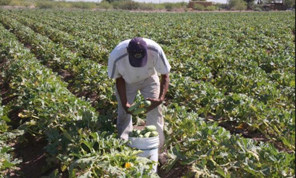 Presentes los cultivos orgánicos en el Valle de Mexicali