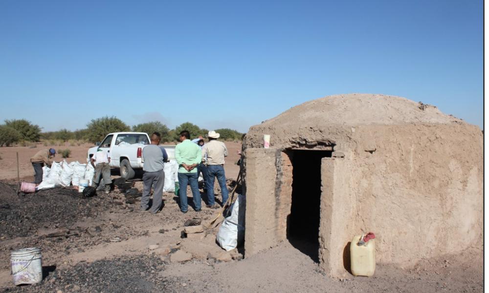 Producen carbón vegetal de manera sustentable en Valle de Mexicali