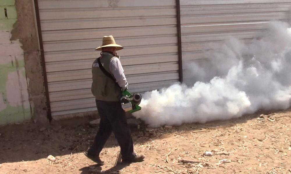 Recomiendan tomar precauciones por presencia de garrapatas en Mexicali