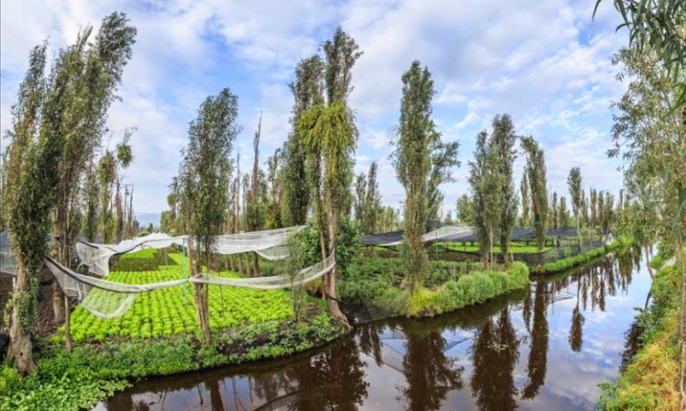 Reconocen a las chinampas de Xochimilco como Patrimonio Agrícola