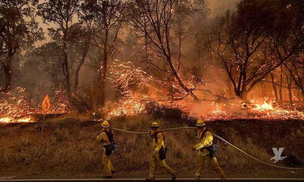 Emite Protección Civil consejos para evitar incendios forestales en Baja California