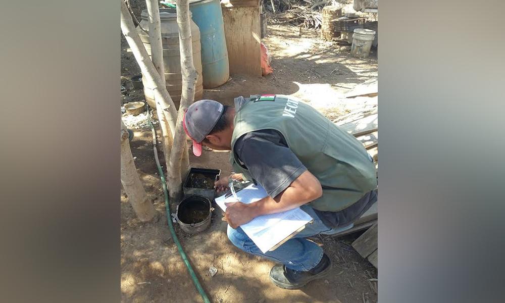 Informan medidas preventivas para evitar el paludismo en Ensenada