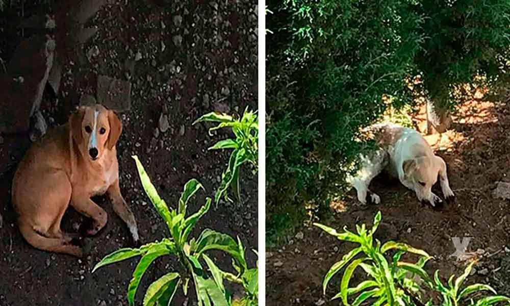 Mujer corta las patas a sus perros porque rascaban en sus plantas