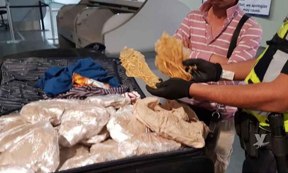 Detienen en aeropuerto a ciudadano chino que transportaba 408 buches de totoaba a Corea del Sur