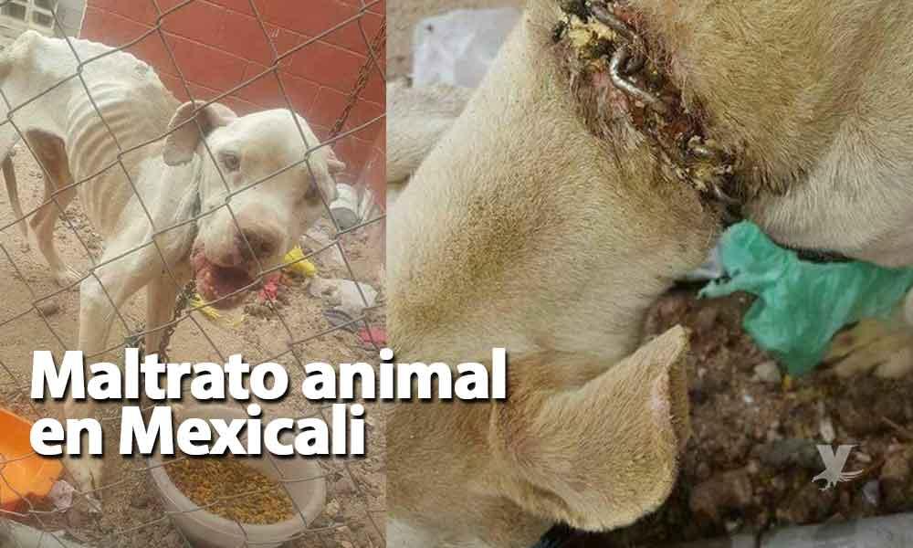 Denuncian grave caso de maltrato animal en Mexicali