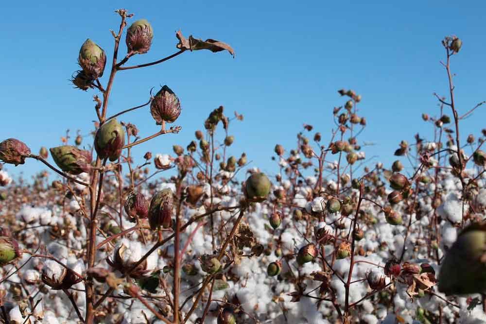 Continúan avanzando las siembras del Primavera-Verano 2018 en el Valle de Mexicali