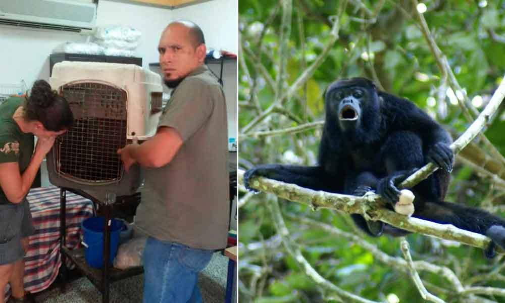 Rescata PROFEPA a mono aullador atacado por perros en Tabasco