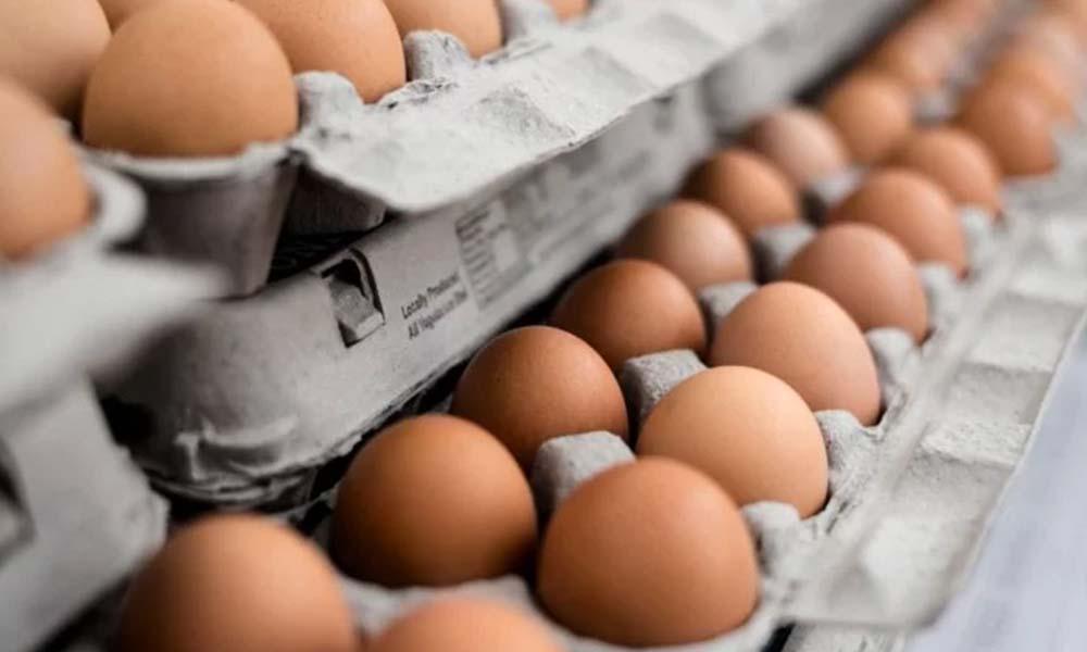 Alerta nacional por brote de salmonela; 35 contagios