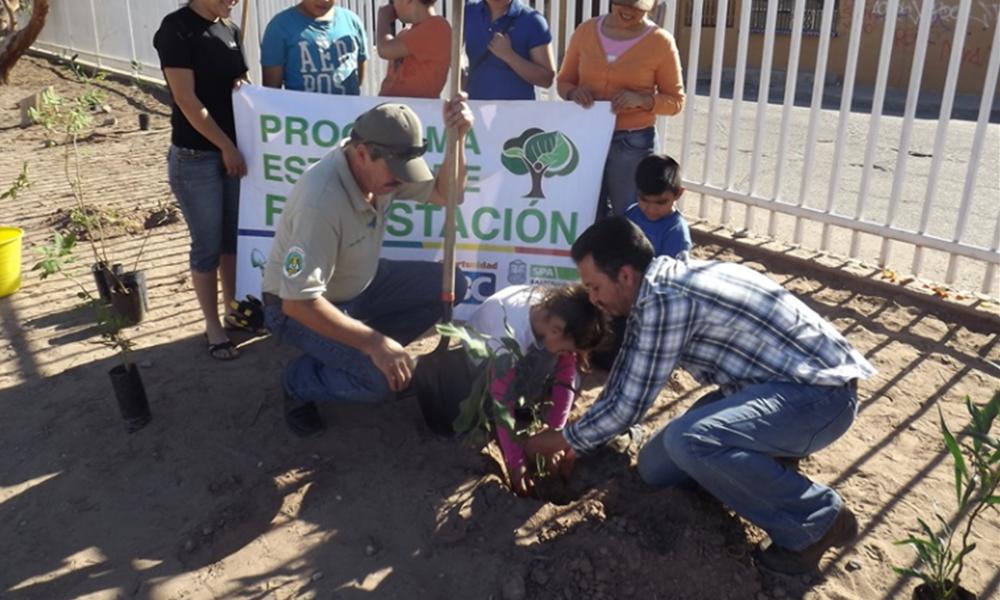 Continúa primer periódo donación de árboles en Mexicali