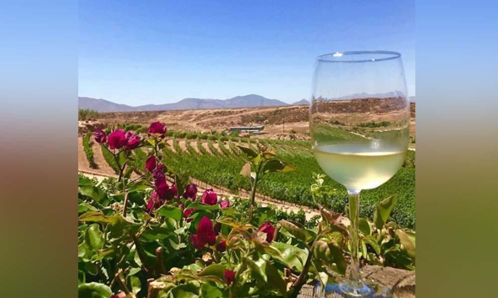 Impulsan la cultura e industria vitivinícola en Playas de Rosarito