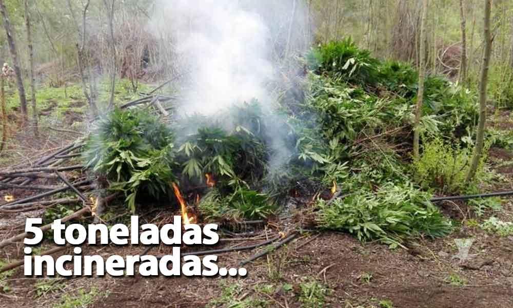 Ejército Mexicano destruyó 5 toneladas de marihuana colombiana en Ensenada