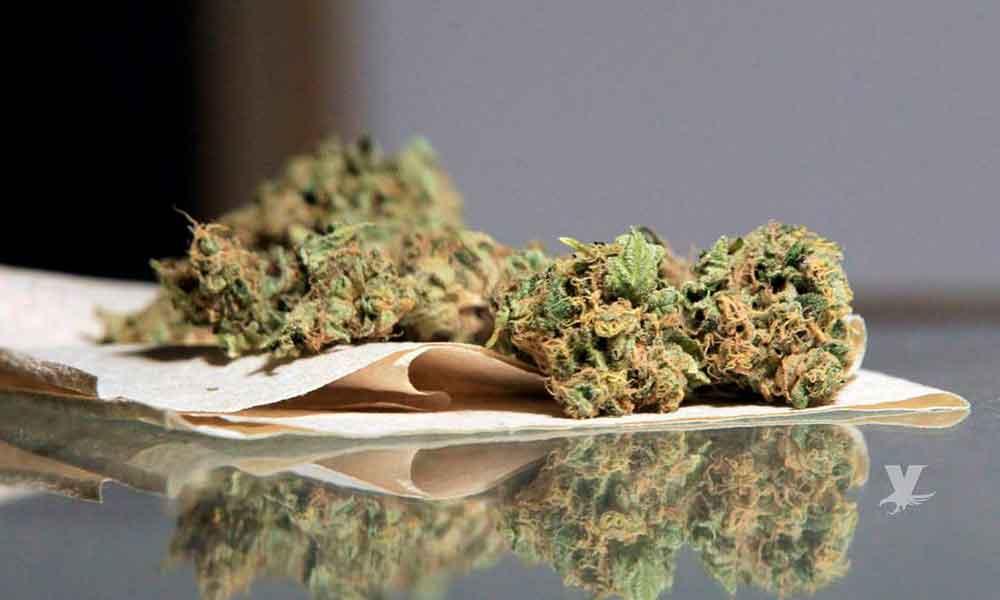 Aseguran más de 4 kilos de marihuana en Ensenada